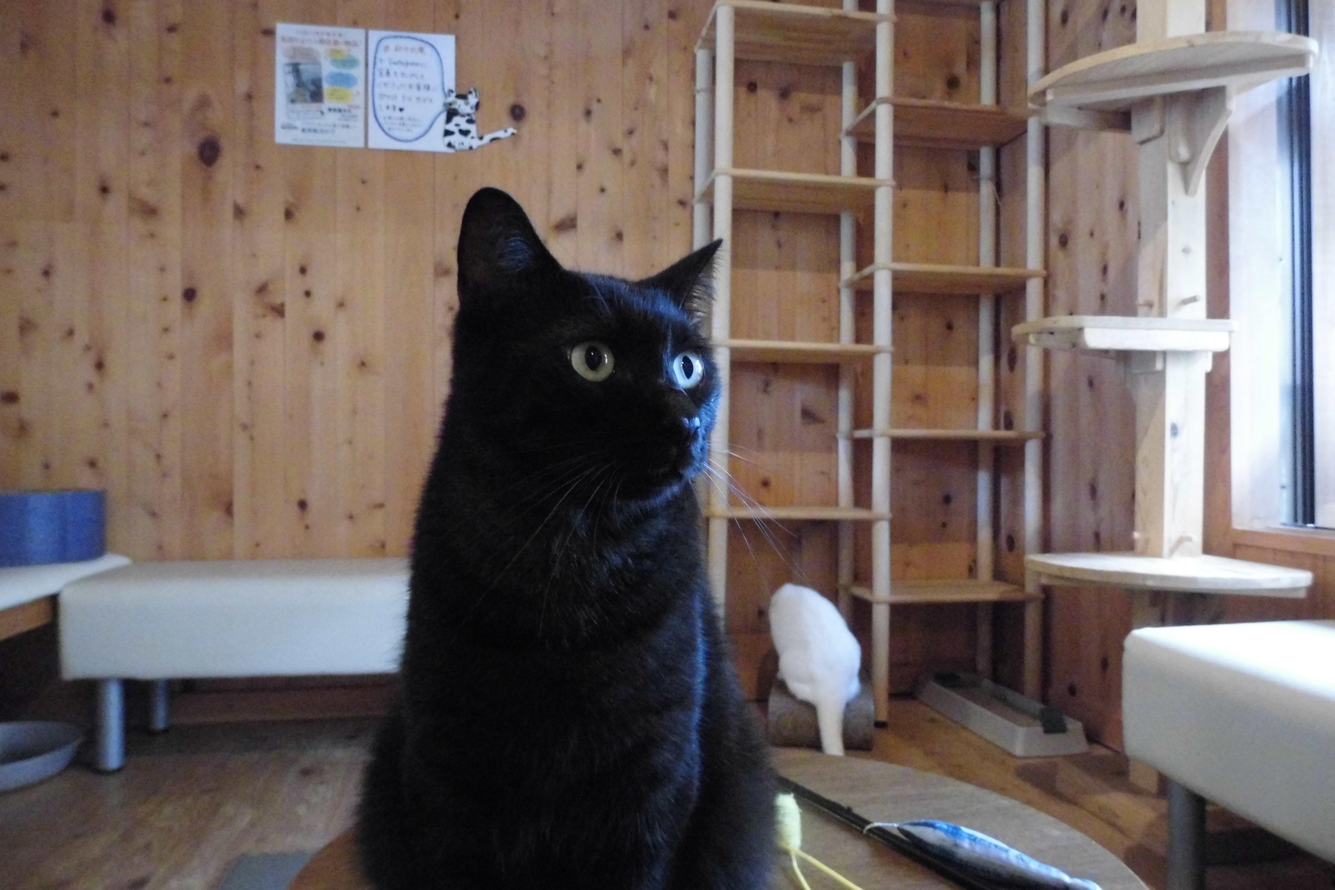 部屋 の 黒 猫